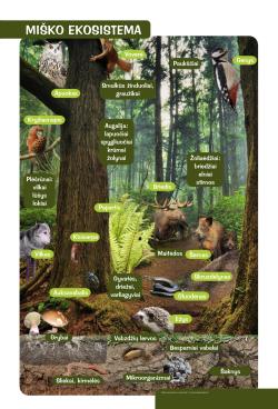 Miško ekosistema
